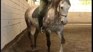 Documentaire L'art du dressage du cheval