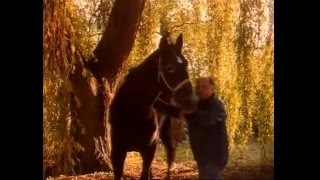 Documentaire Le Roi Tidalium champion des hippodromes