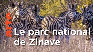 Le grand repeuplement de Zinave au Mozambique | Les nouveaux mondes sauvages