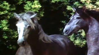 Documentaire Le signe du cheval – Les andalous et l'arène