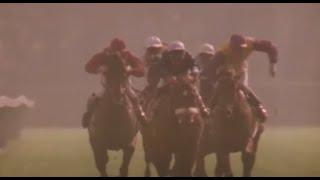 Le signe du cheval - Les courses