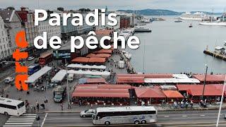 Documentaire Le ventre de Bergen | Le marché aux poissons
