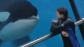Documentaire Les animaux sauvages en captivité