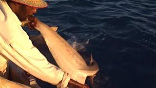 Documentaire Les chasseurs de requins