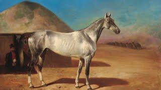 Documentaire Les chevaux Akhal-Tékés du Caucase