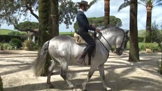Documentaire Les chevaux andalous, la tradition et l'excellence