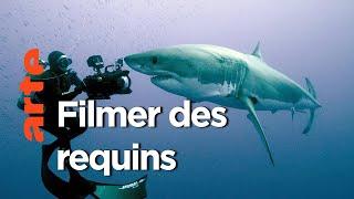 Documentaire Les coulisses d'un tournage | Dans le sillage des requins