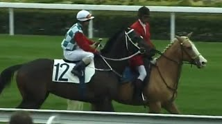 Documentaire Les écuries du Hong Kong Jockey Club