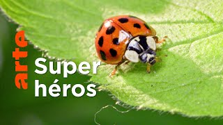 Documentaire Les insectes, des héros à six pattes