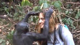 Documentaire L'homme, la bête et la caméra