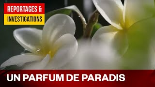 Documentaire Monoï : le trésor de Tahiti