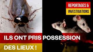 Documentaire Paris grouille-t-il ? – La vie animale souterraine