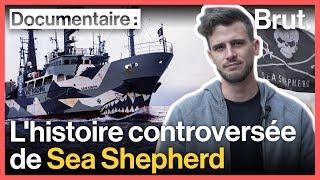 Pirates ou sauveteurs des mers ? L'histoire de Sea Shepherd