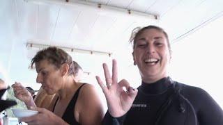 Documentaire Plongée sur l'île aux requins