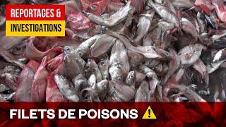 Poissons toxiques, élevage en eaux troubles - Enquête sur l'alimentation