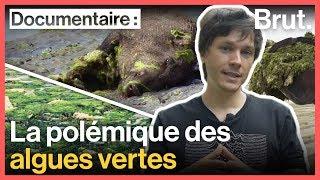 Documentaire Pourquoi les algues vertes pourraient constituer une menace