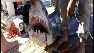 Documentaire Alerte : les requins attaquent !
