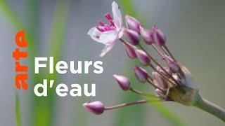 Au fil de l'eau | Les secrets des fleurs sauvages