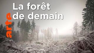 Documentaire Comment reboiser les forêts et les préserver ?
