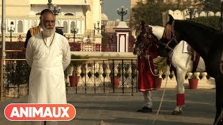 Documentaire Cheval Marwari, la renaissance du prince des Indes