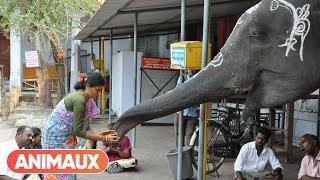 Documentaire Les animaux et le sacré: l'Inde