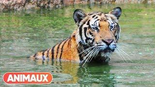 Documentaire Les animaux et le sacré: la Thaïlande