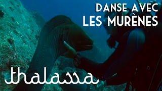 Documentaire Danse avec les murènes
