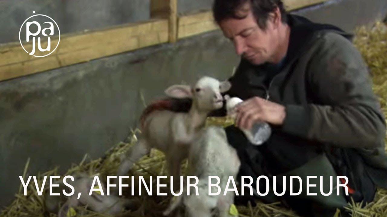 Documentaire Éleveur de brebis, Yves fabrique des fromages bios à l'arôme de ses montagnes