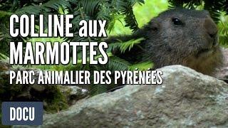 Parc animalier des Pyrénées de Argelès-Gazost - La colline aux marmottes