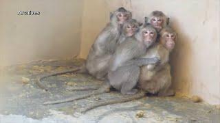 Documentaire Peut-on se passer de l'expérimentation animale ?