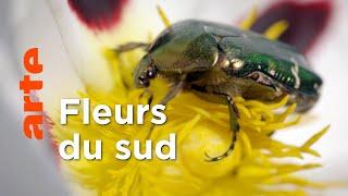 Sous le soleil | Les secrets des fleurs sauvages