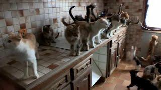 Syndrome de Noé, ils collectionnent les animaux !