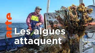 Documentaire Une menace pour les pêcheurs