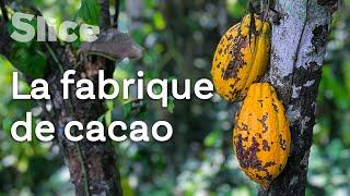 Documentaire Baracoa, la capitale du cacao cubain