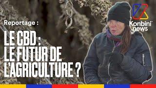 Documentaire Dans la ferme de Nathalie, productrice de chanvre