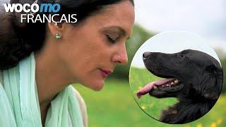 Dans la peau des animaux - Comment décoder leur langage et leurs émotions