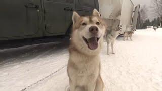 Documentaire Il part s'installer au Québec pour vivre de sa passion des huskies