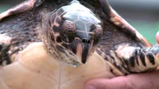 La Réunion : mégafaune marine dans l'océan Indien