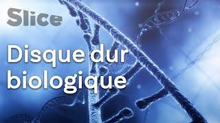 L'ADN, un média de stockage pour le « Big Data » ?