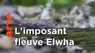 La libération du fleuve Elwha, Etats-Unis | Le retour de la nature sauvage