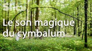 La musique envoûtante des forêts croates