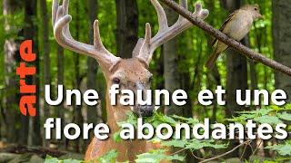 La renaissance des forêts de Nouvelle Angleterre, Etats-Unis | Le retour de la nature sauvage