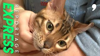 Le concours du plus beau chat de France