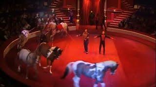 Les chevaux du Cirque d'Hiver