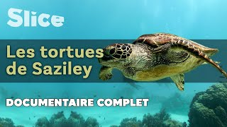 Les tortues de Saziley