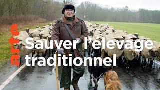 Documentaire Les tribulations d'un berger transhumant