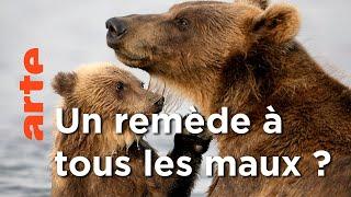 L'incroyable résistance d'un Ours | Fort comme un ours