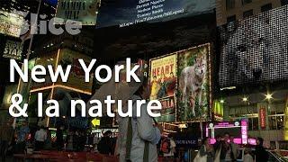 New York vs Wild : un territoire à partager
