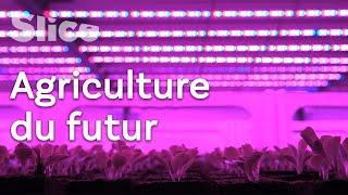 Nouvelle agriculture : les LEDs, un soleil artificiel