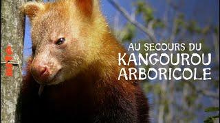 Documentaire Papouasie-Nouvelle-Guinée – Jim & Jean au secours du kangourou arboricole